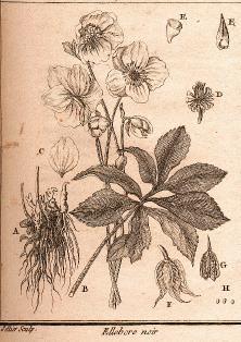 Des vertus des plantes par Macer Floridus, 1832 Ellebore2